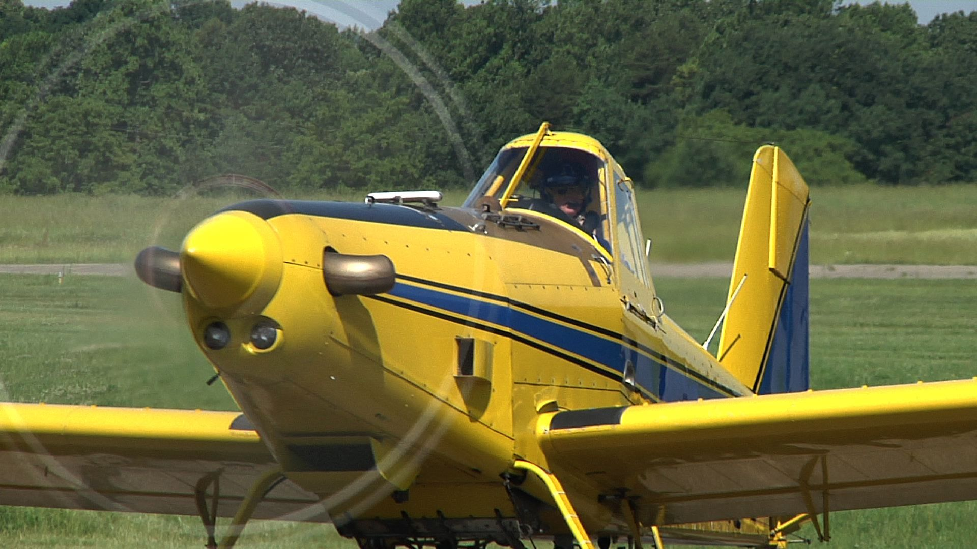 Image of Gypsy Moth Disruption Treatments to Begin in Ohio