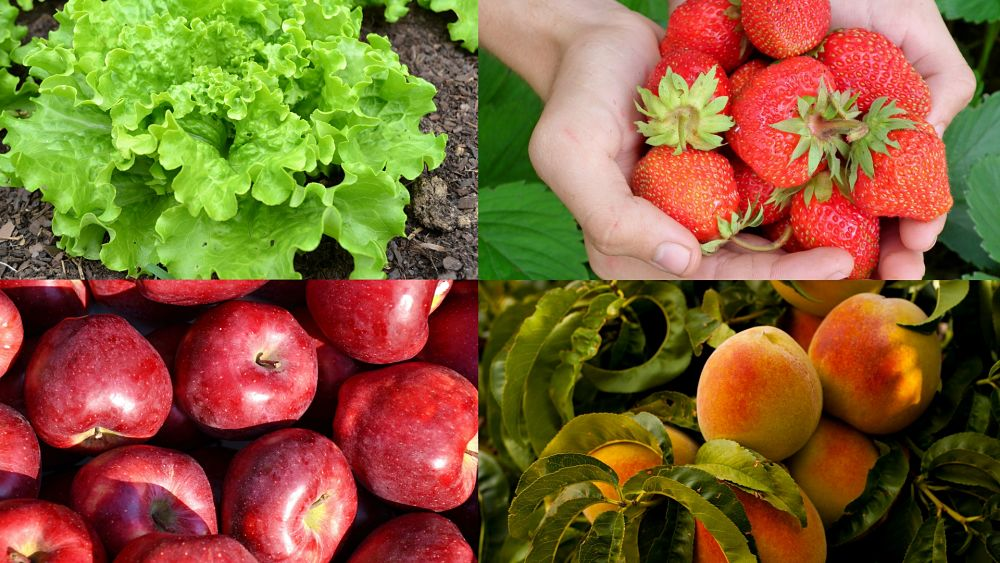 Produce Safety Consultations Now Available for Ohio Growers