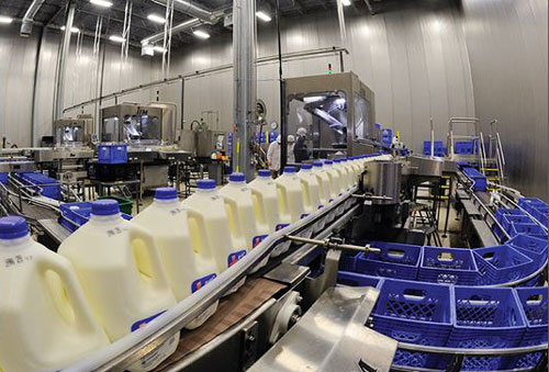 Milk jugs being moved thru a milk plant
